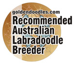We are a Recommended Australian Labradoodle Breeder.