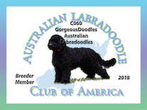 We are a member of the Australian Labradoodle Club of America (ALCA).