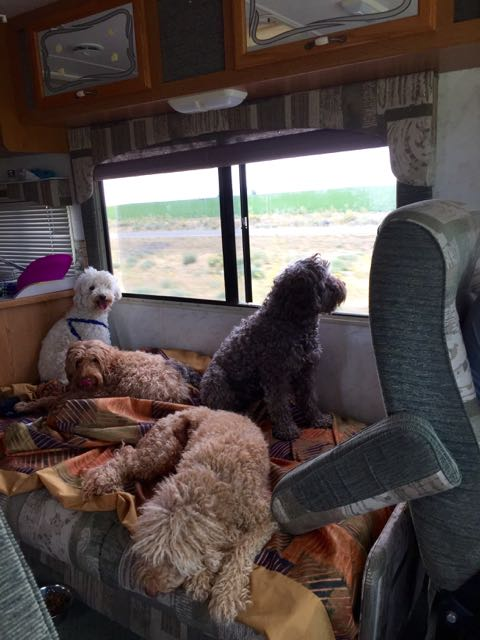On The Road Rv Ing With Your Pet Gorgeous Doodles