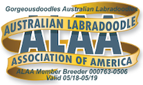 We are a member of the Australian Labradoodle Association of America (ALAA).