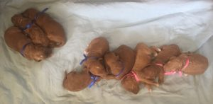 Beautiful Babies 10 days old