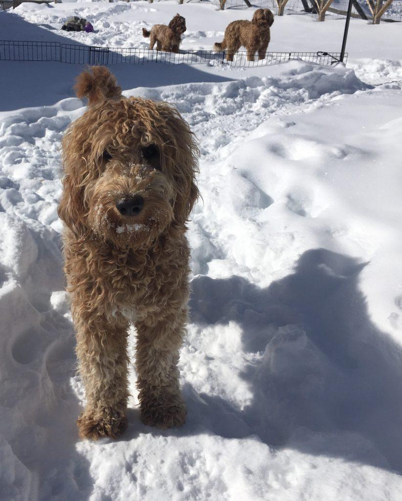 Brynn in snow
